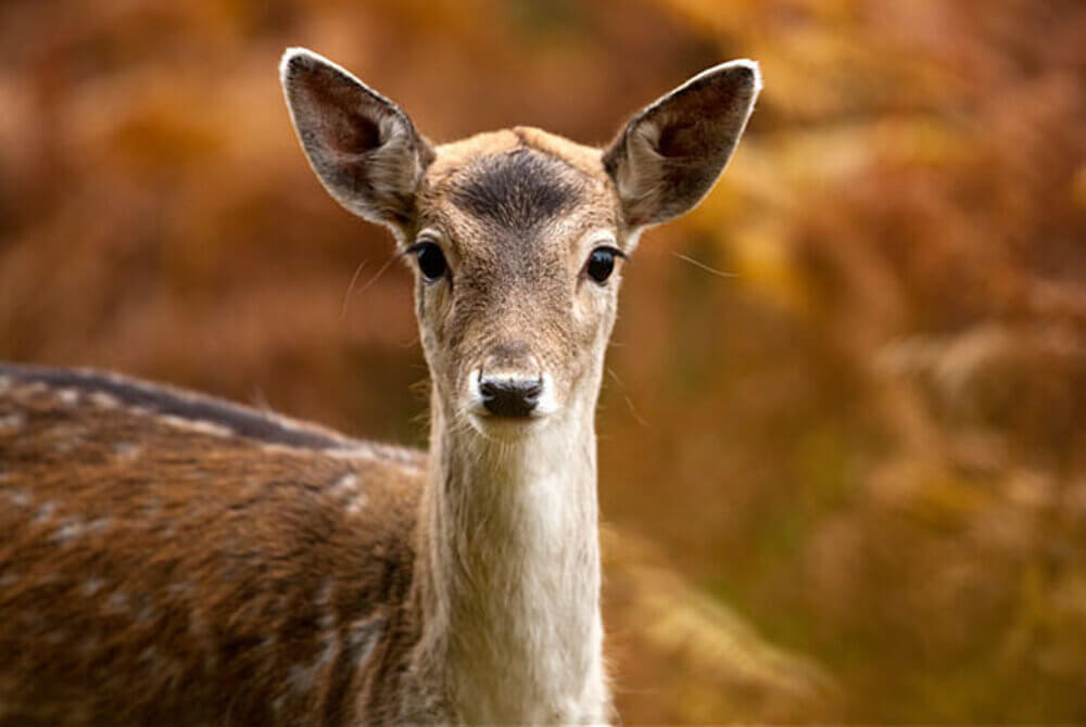 Bradgate Park in Leicester 5