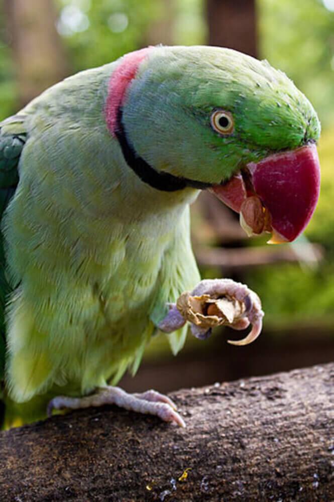 Tropical Birdland Leicester 7