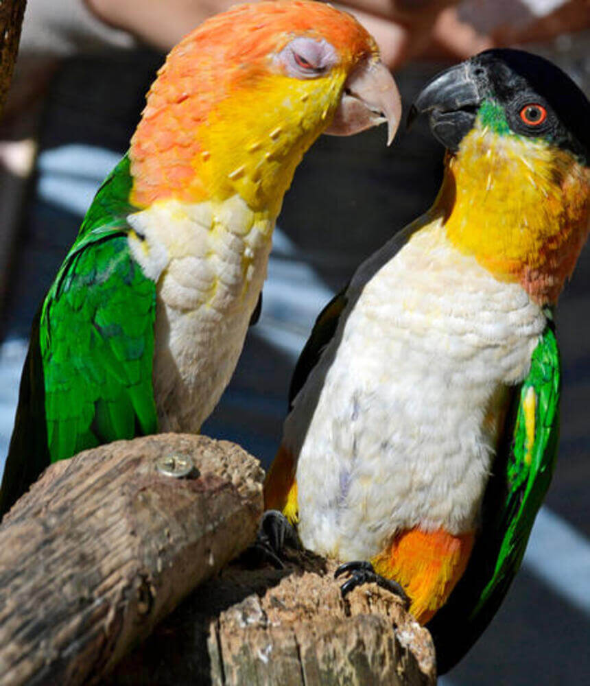 Tropical Birdland Leicester 6