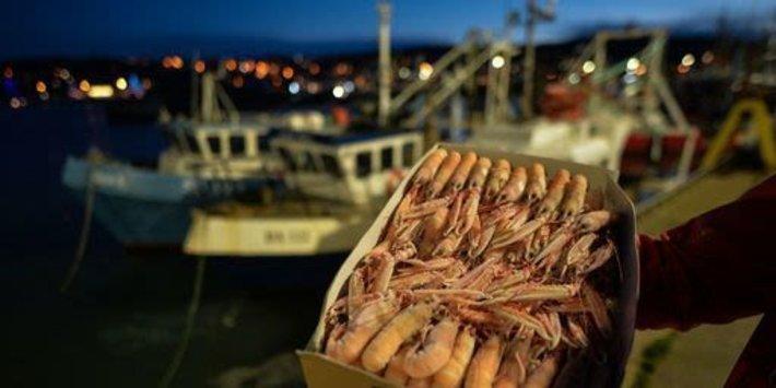 İskoç Balık Tüccarları Brexit'in Onlara Günde 1 Milyon Sterlin'e Mal Olduğunu Ve Hükümetin Onları Geri Ödemesini İstediğini Söyledi
