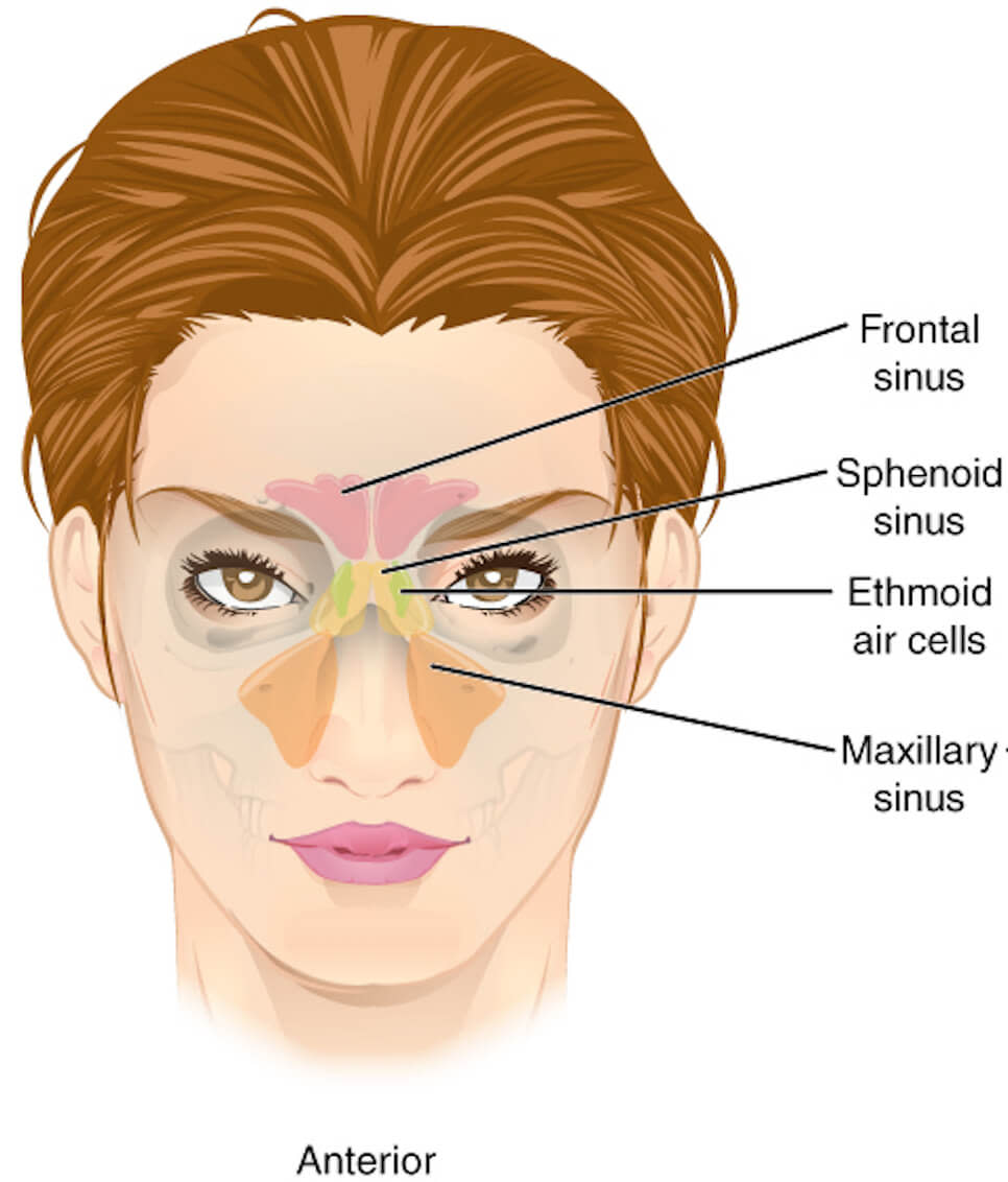 sinus pressure points
