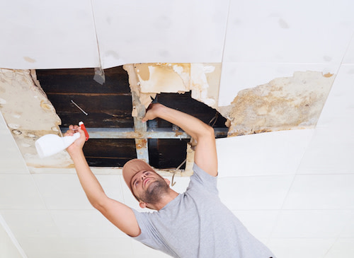 repairing mold growth
