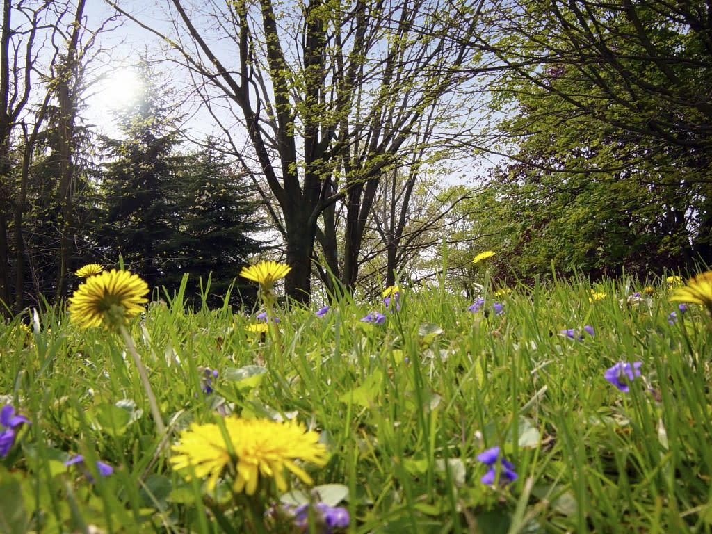 spring allergy symptoms from pollen