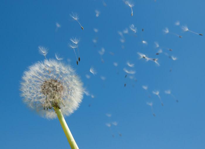 airborne allergens