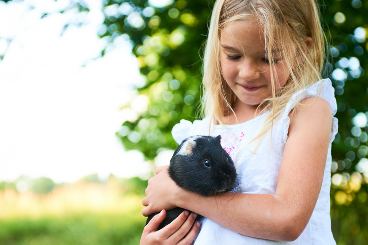 hypoallergenic guinea pig with girl