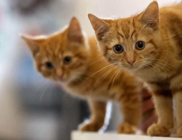 «Мир, дружба, лапки»: рассказываем, как помочь миллионам бездомных животных, просто купив одну вещь