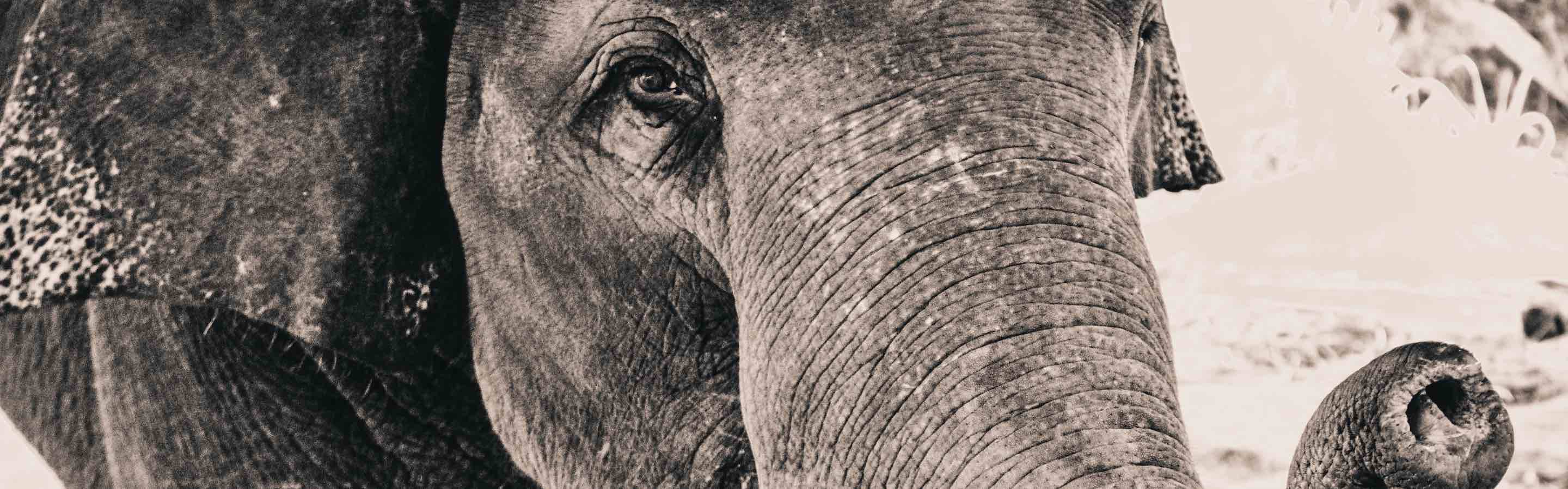 Could PostgreSQL 9 5 be your next JSON database? - Compose