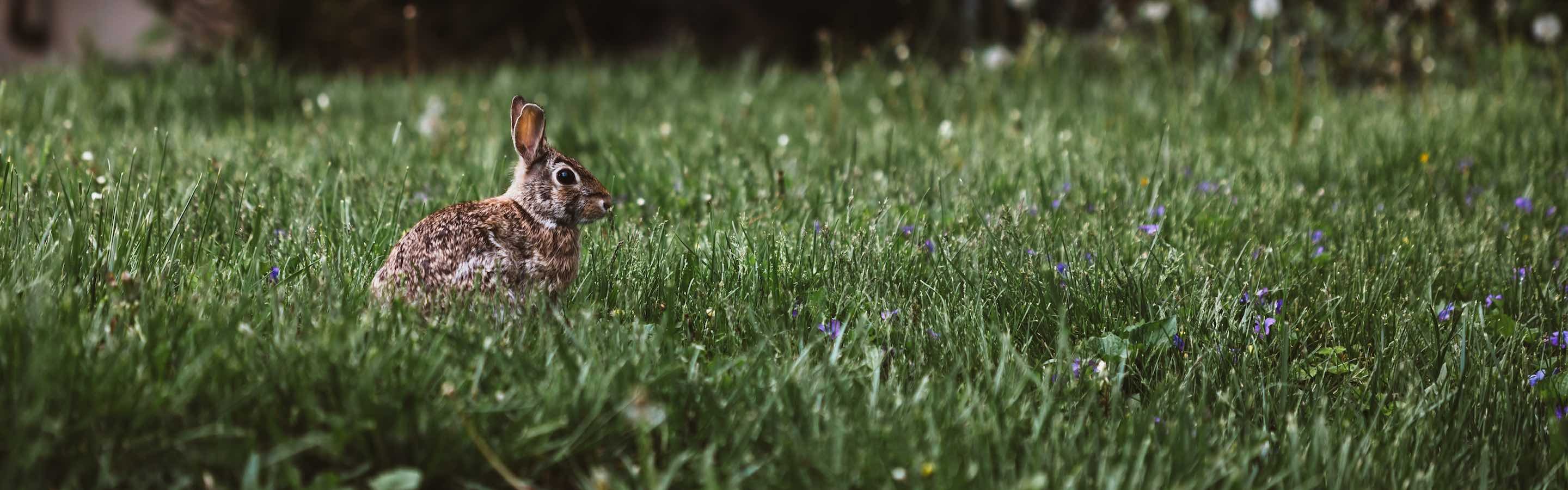 MQTT and STOMP for Compose RabbitMQ