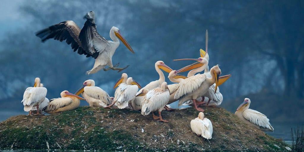Bharatpur Bird Sanctuary Near Delhi