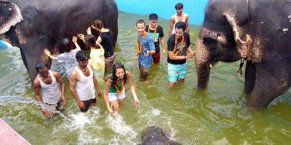 Fun with Elephants in Kochi