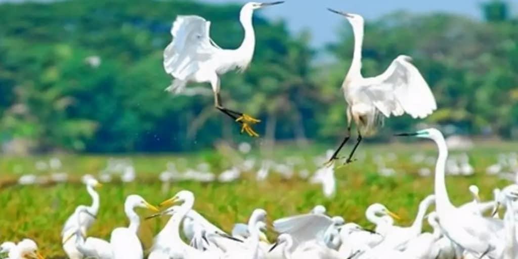 Go Birding at Kumarakom in Kochi