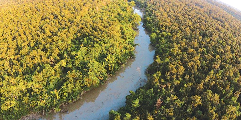 places to visit in January in India - Sundarbans