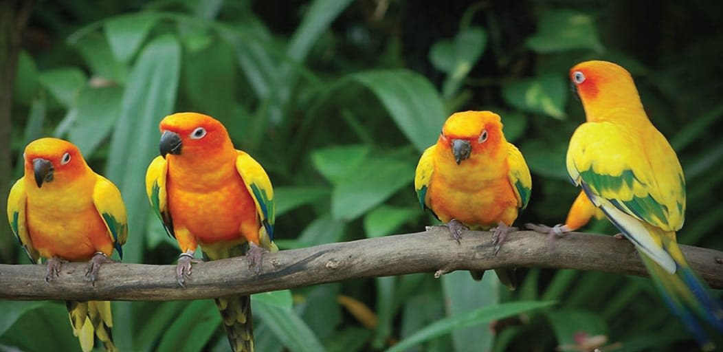one day picnic spots near Mumbai - karnala bird sanctuary