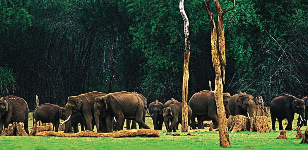 places to visit in Munnar in 1 day - carmelagiri elephant park