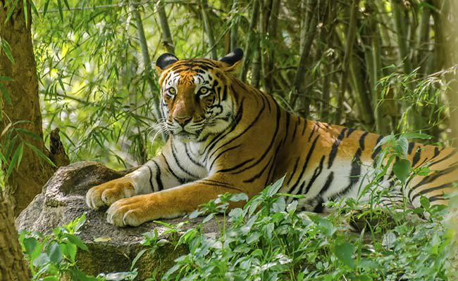 wildlife safari in India