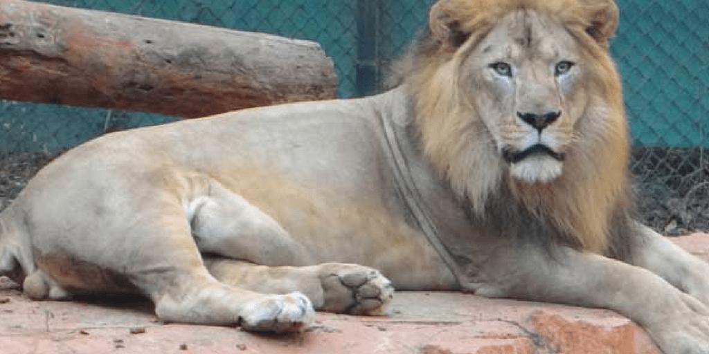 places to visit near Mysore-Mysore zoo