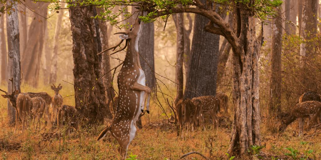 Places to visit near Mysore-Nagarhole National Park
