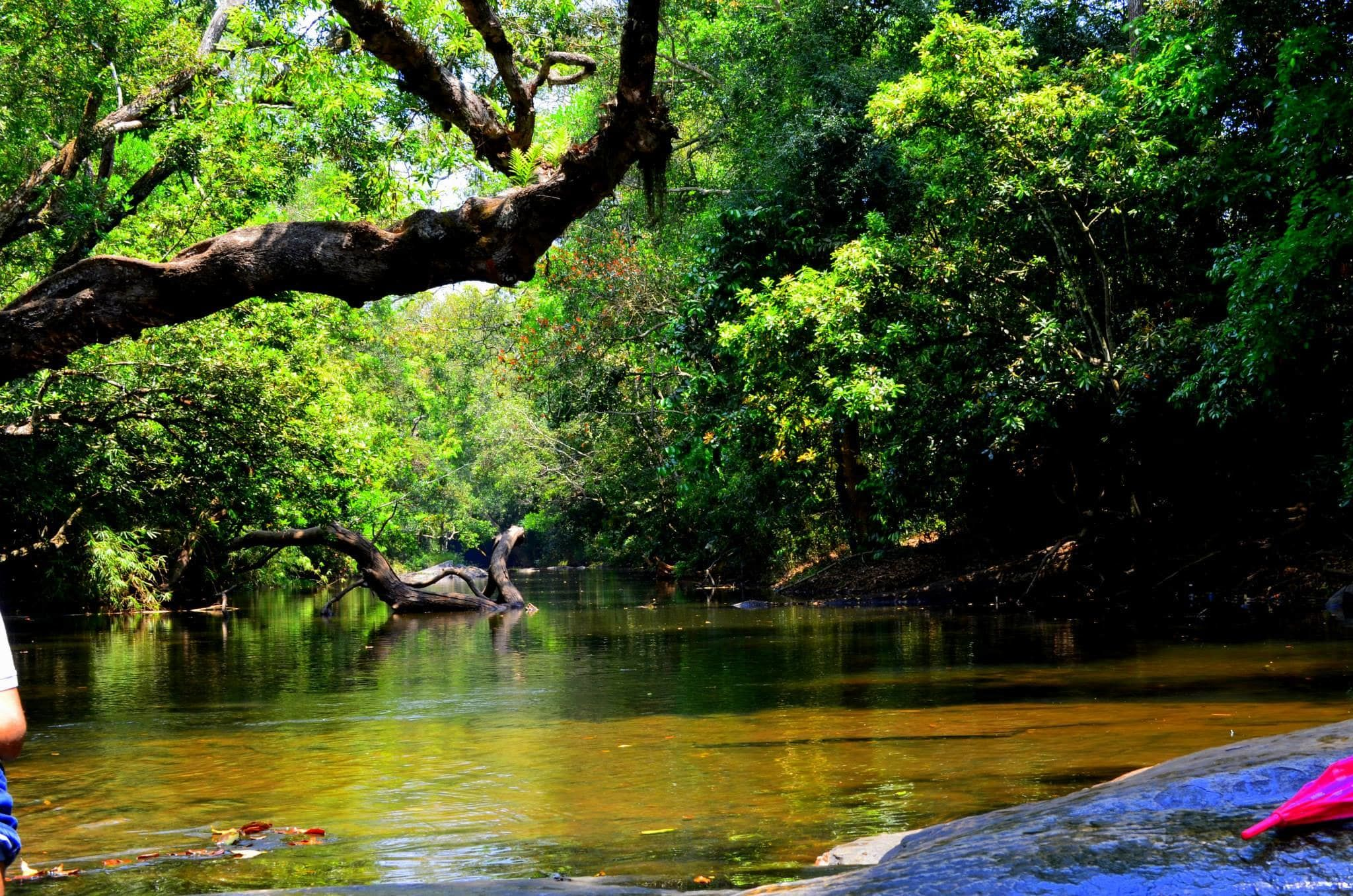 Places to visit in Coorg in one day-Nisargadhama