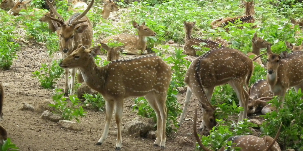 places to visit in Hyderabad in one day-Nehru Zoological park