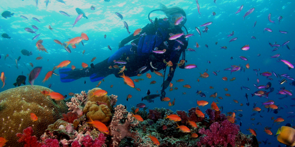 Activities You Must Try While Visiting Andaman-snorkelling