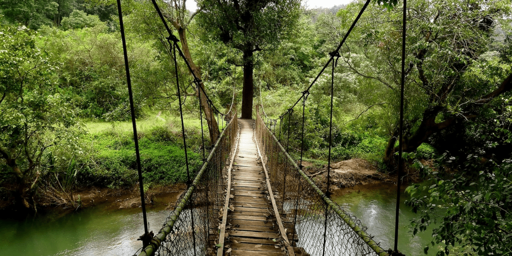 Best holiday Destinations In India-Coorg