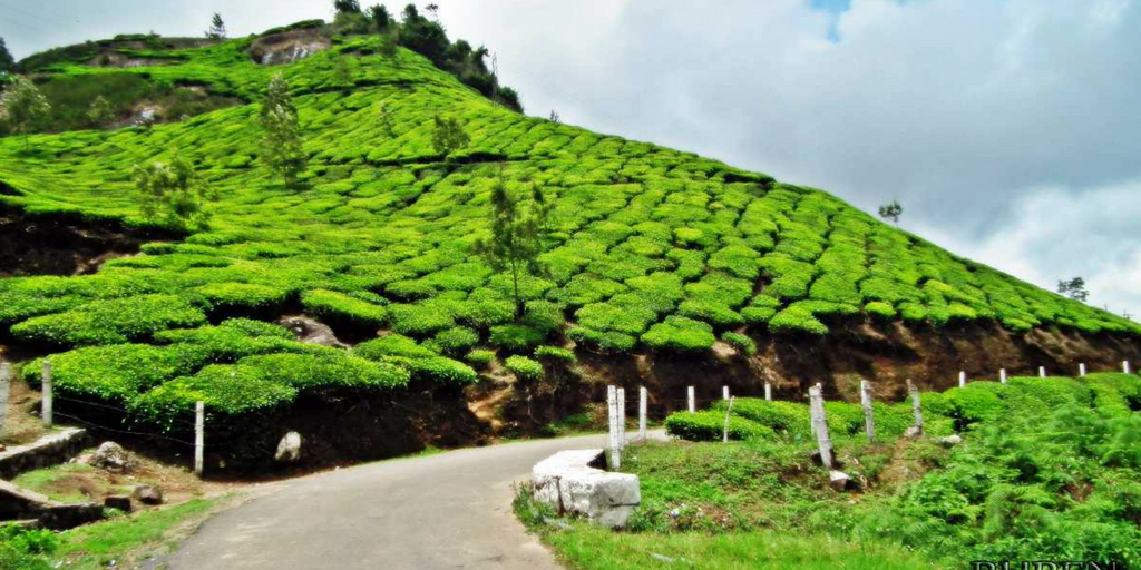 Best holiday Destinations In India-Munnar