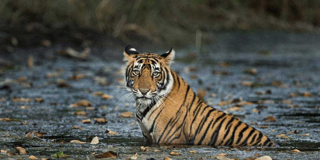 Best holiday Destinations In India-Ranthambore