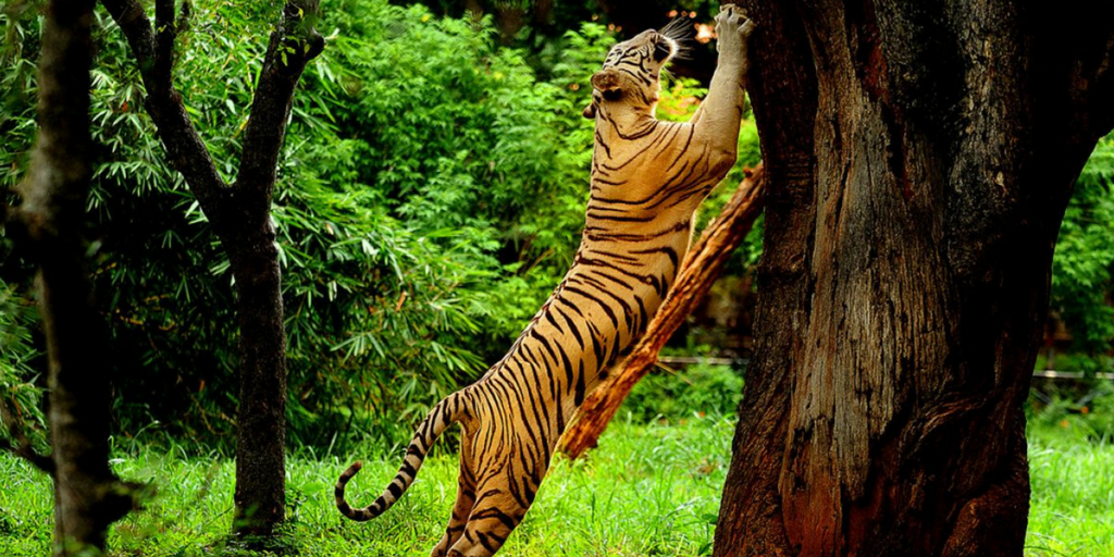 Trekking Destinations in Coorg-Pushpagiri wildlife sanctuary