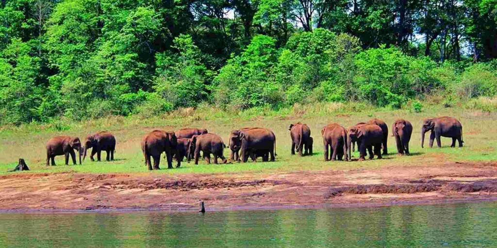 Tourist places in Kerala-Thekkady