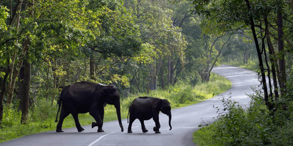 Tourist places in Kerala-Wayanad