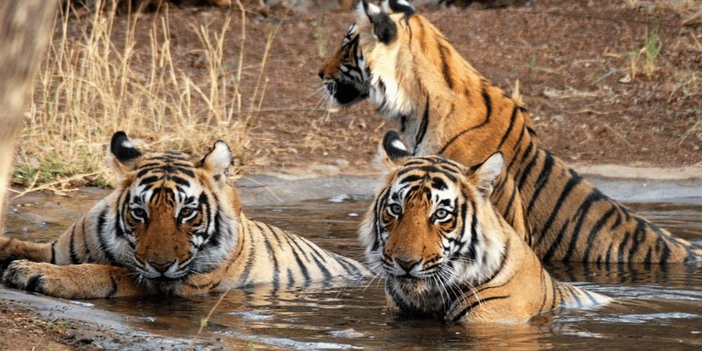 Women's day in India-Corbett National Park
