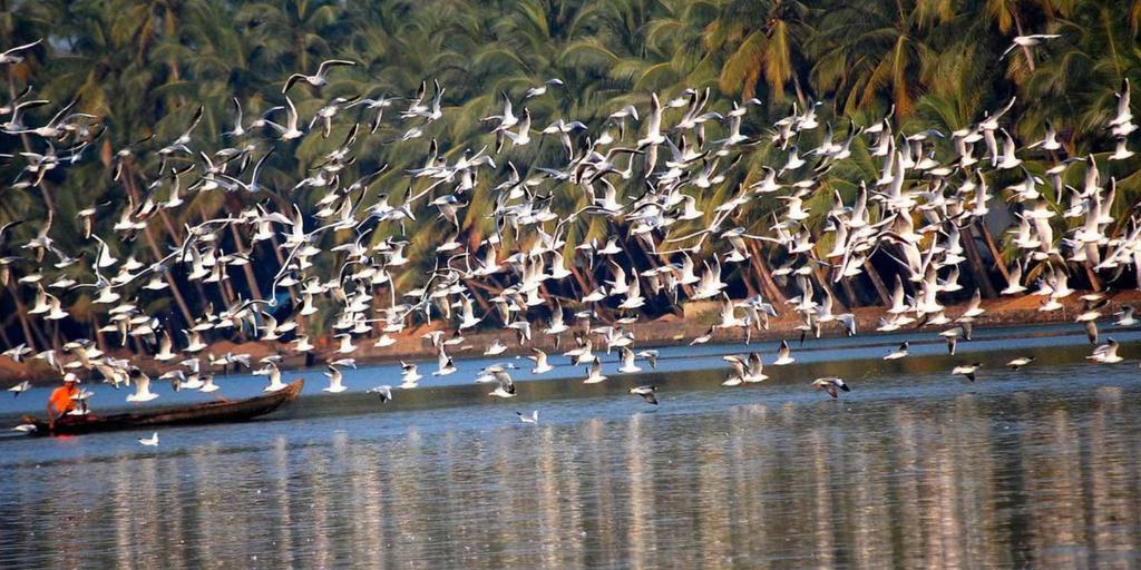 Places to visit near Kochi-Kumarakom bird sanctuary