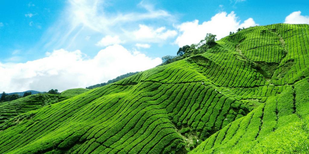 Tourist Places near Kochi-Munnar