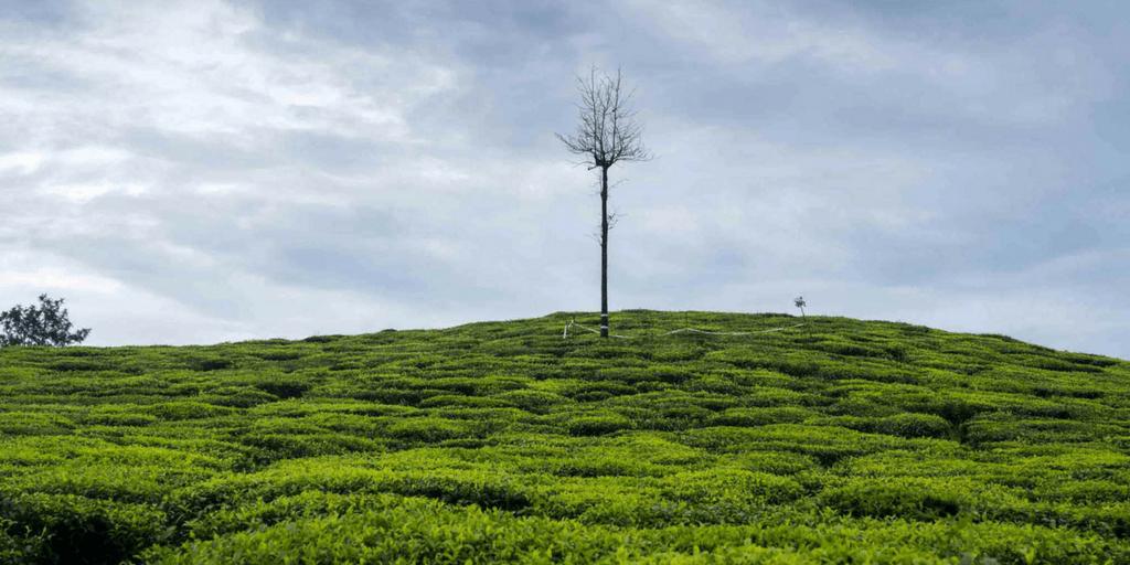 Tourist Places near Kochi-Pollachi