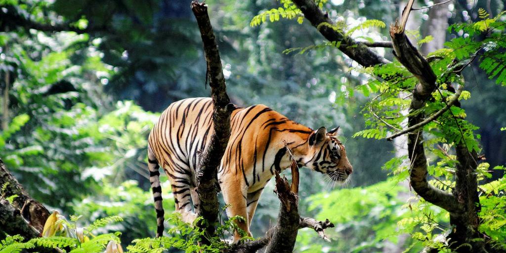 Tourist Places near Kochi-Thekkady