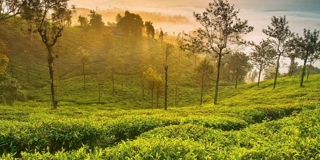 Places to visit in June-Ooty