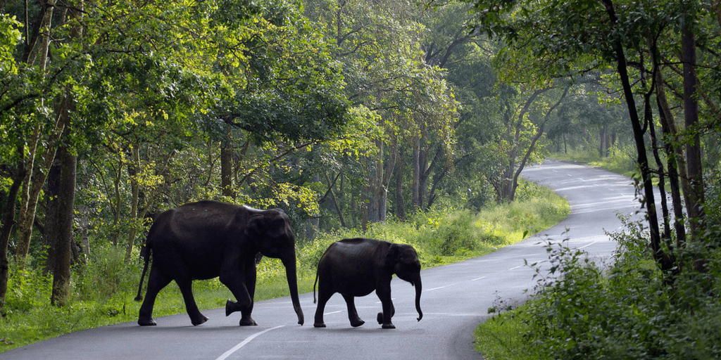 Places to visit in June-wayanad