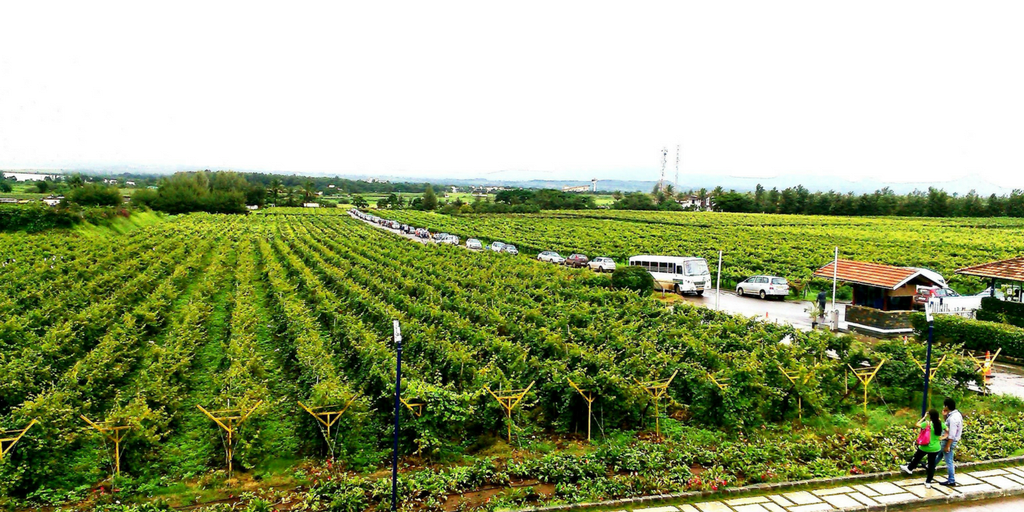 Road trips from mumbai- Sula Vineyards