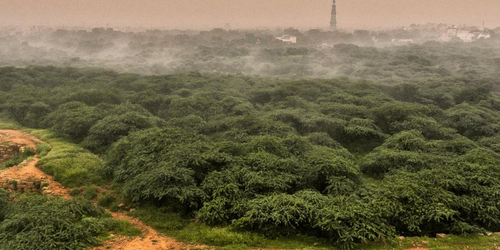 Haunted places in Delhi- Delhi Ridge Area