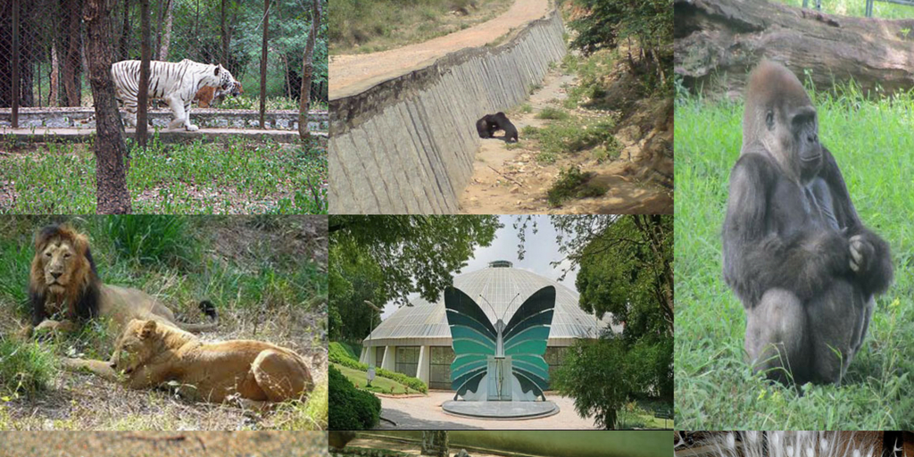 Places to visit near Bangalore within 100km-Bannerghatta National Park