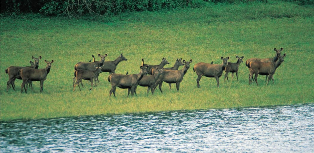 Places to visit in Wayanad in 2 Days - begur wildlife sanctuary