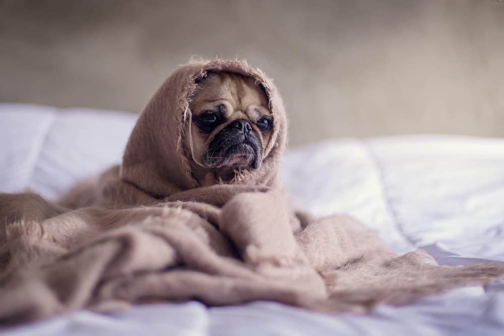 在宅勤務を始めて眠れなくなった人に送るぐっすり眠る7つの方法
