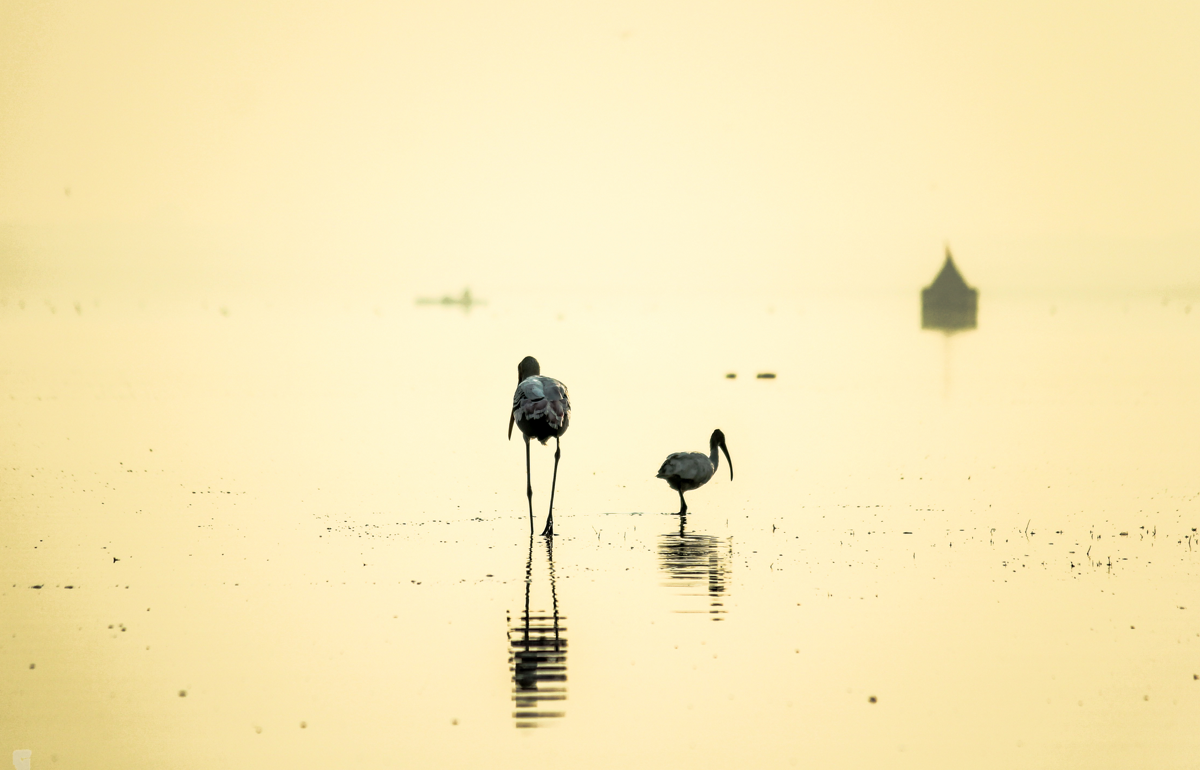 Birdwatching at Bhigwan - Flamingos and Moods of the Morning. Photography