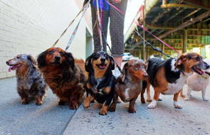 Top seven Sydney apartments perfect for dogs