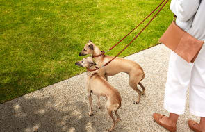 Pet friendly palaces: 5 incredible Melbourne apartments which welcome your pets