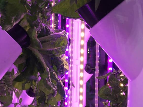 High-yield produce gardens with next-to-no maintenance are set to enhance apartment living in Australia