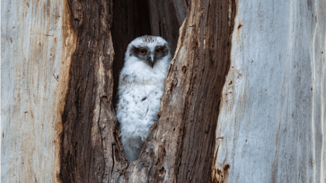 Urban owls are losing their homes. So we're 3D printing them new ones