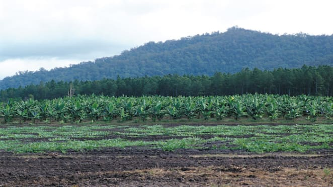 Far North Queensland rural market seen with cautious optimism in 2020: HTW rural