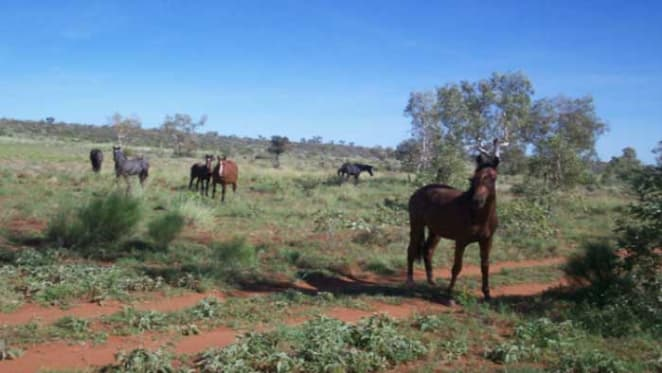 Momentum staying in Northern Territory pastoral market