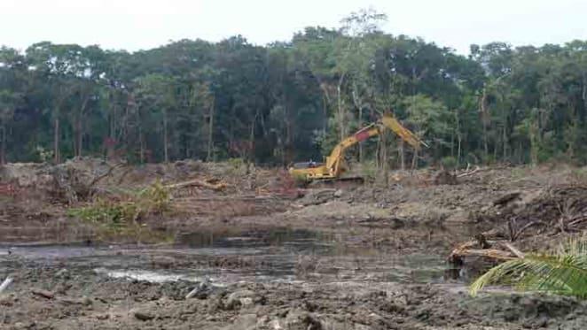 Queensland land clearing is undermining Australia's environmental progress